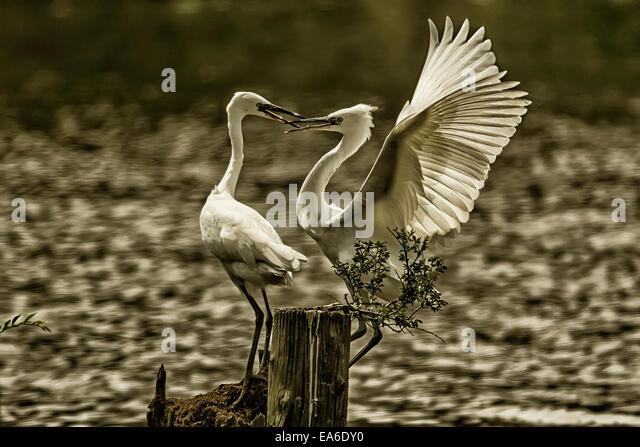Japan, Tokyo, Mizumoto Park, Birds perching on wooden post - Stock Image