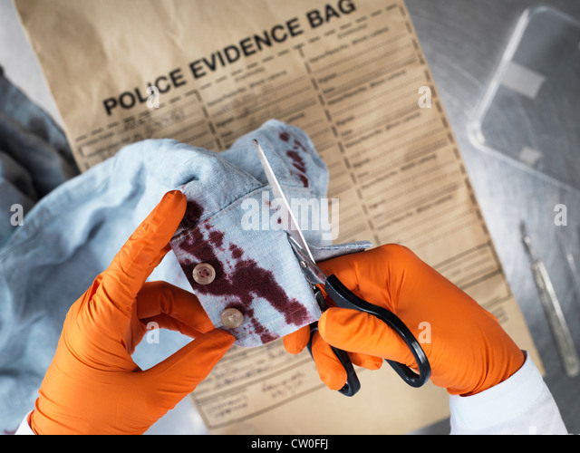 Scientist cutting up bloody clothing - Stock Image