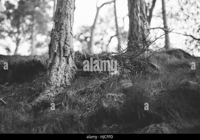 Forest Hobbit Stock Photos Amp Forest Hobbit Stock Images