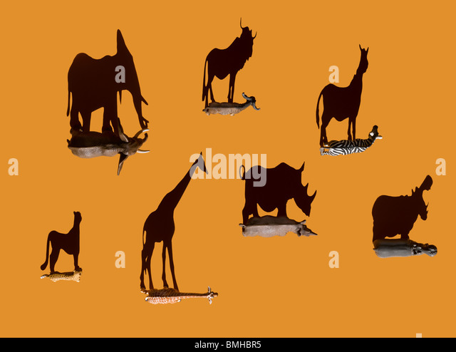 Toy wild animals shot overhead with shadows - Stock Image