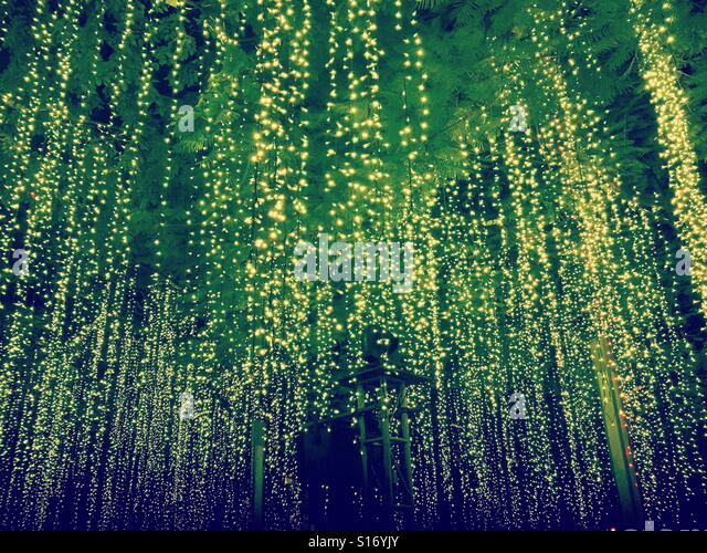Fairy lights hanging from a tree - Stock-Bilder