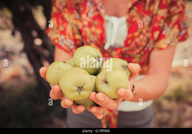A young woman is standing under a tree and is holding a bunch of apples - Stock Image