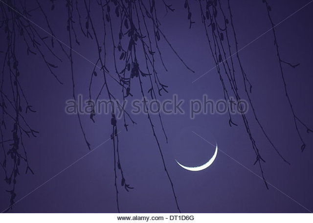 The Netherlands new moon purple sky with weeping willow branches - Stock Image