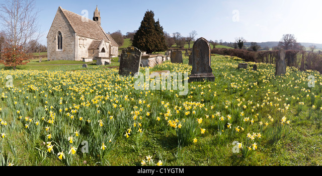 A panoramic view of daffodils in springtime at the church of St John the Baptist in the village of Harescombe, Gloucestershire - Stock Image