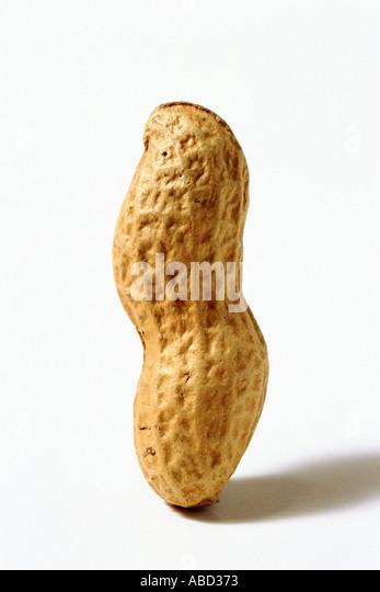 Whole upright peanut shell - Stock Image