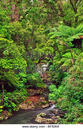 Subtropical forest, Waipoua Sanctuary, New Zealand - Stock Image