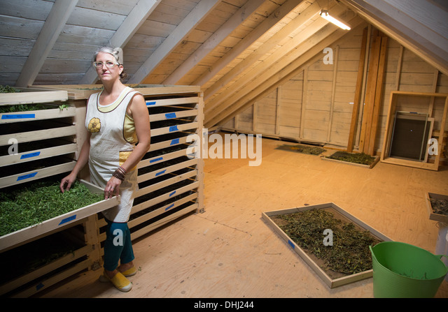 Woman checking seed tray on family herb farm - Stock-Bilder