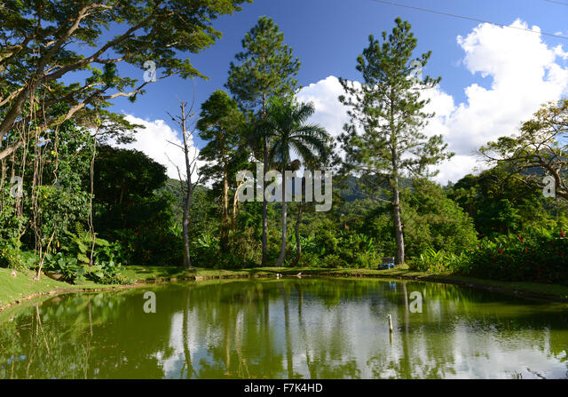 Beautiful scenery of pond and vegetation at Hacienda San Pedro (artisanal coffee producer). Jayuya, Puerto Rico. - Stock Image