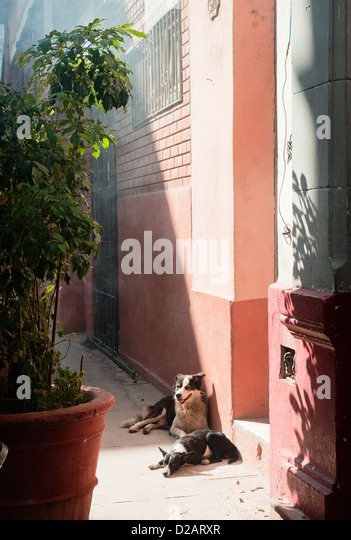 Dogs sitting outside front door - Stock Image