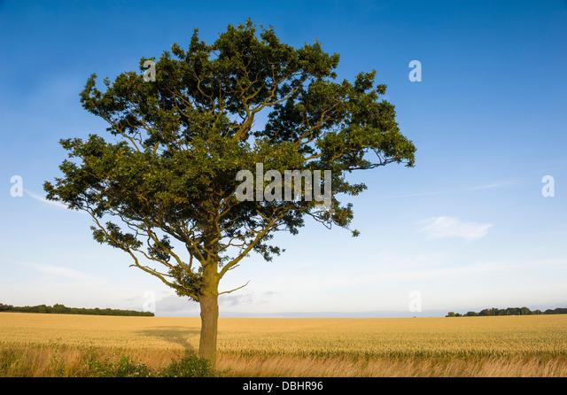 lone oak gay singles Johnv55 live stream farming simulator 17 lone oak farm - duration: 2 hours, 57 minutes 80 views streamed 1 week  welkers farm single player - playlist updated 5.