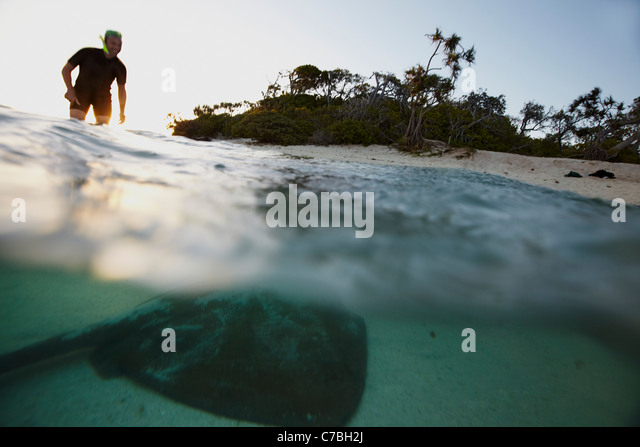 Snorkeler and stingray late afternoon near Heron Island eastern part is part of the Capricornia Cays National Park - Stock Image