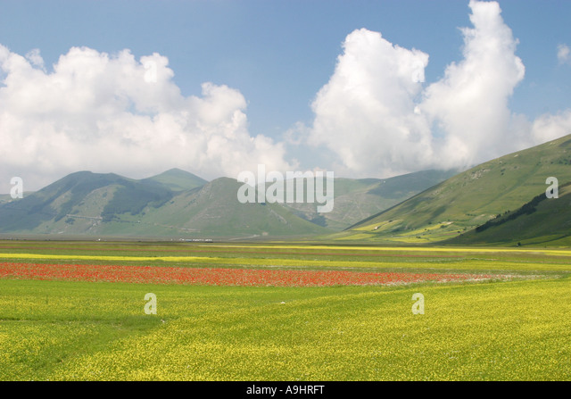 Wonderful display of wild flowers in the Piano Grande,Castelluccio,Sibillini National Park in Le Marche Italy - Stock Image