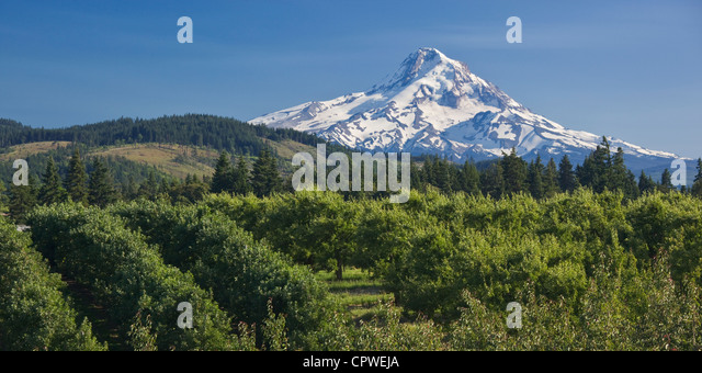 Hood River County, Oregon View of snow covered peak of Mount Hood above the fruit orchards of Hood River Valley - Stock-Bilder
