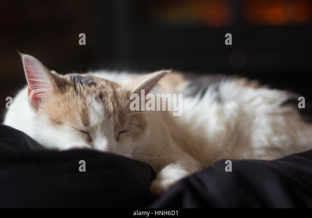 Black White Cat Chair Stock Photos amp Black White Cat Chair  : sleeping calico cat hnh6d1 from www.alamy.com size 640 x 447 jpeg 26kB