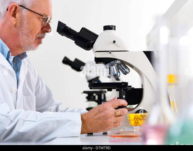 Scientist using a light microscope - Stock Image