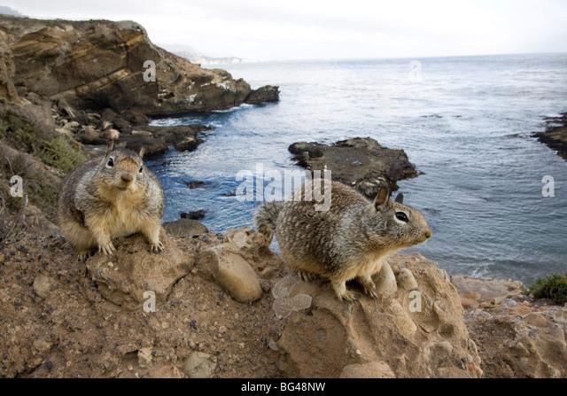 Chipmunks, San Francisco, California, United States of America, North America - Stock Image