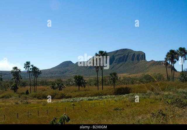 Jardim Maytrea, Morro da Baleia, Chapada dos Veadeiros, Veadeiros Tableland, Goias, Brazil - Stock Image