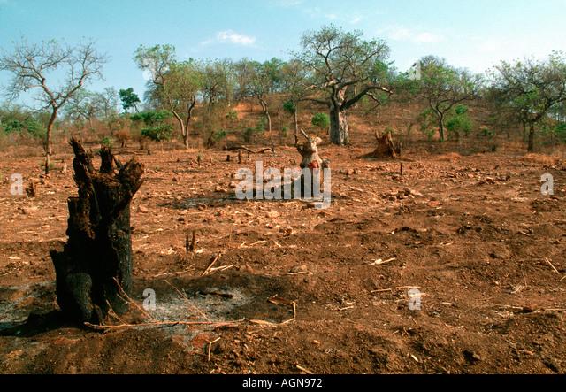 Land cleared by shifting cultivation Monkey Bay Mangochi Malawi - Stock Image
