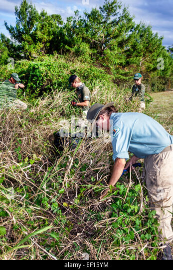 Stuart Florida Seabranch Preserve State Park Conservation Corps student volunteer clearing removing invasive species - Stock Image