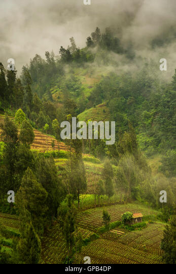 Foggy morning at the agricultural slopes of Bromo volcano, Java, Indonesia - Stock Image