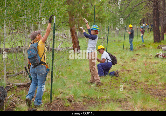 Volunteer workday, volunteers and USFA staff work to repair an elk fence, Coconino National Forest, north of Flagstaff, - Stock Image