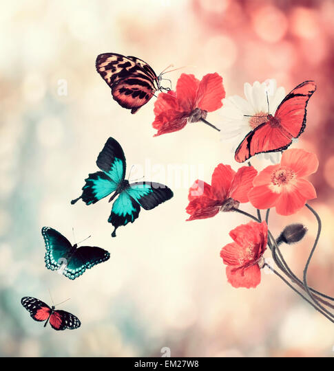 Digital Painting Of Flowers And Butterflies - Stock Image