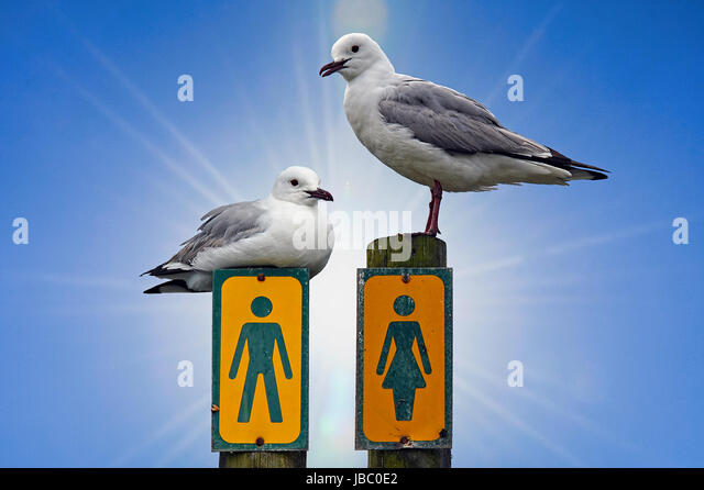 Seagulls and Sex - Stock Image