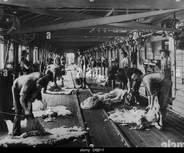 Shearing sheep, Burrawang, Australia - Stock Image