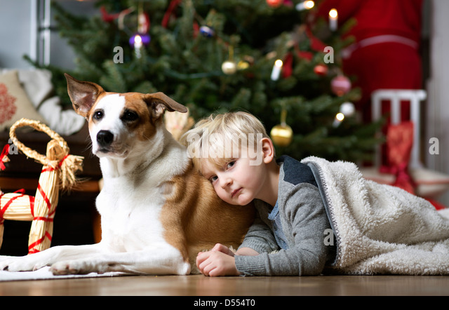 Boy and dog by Christmas tree - Stock Image