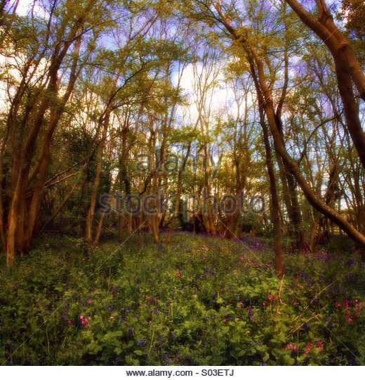 Enchanted Glade - Stock Image