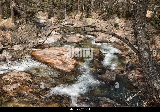 river, clear water in the wild forest in the location Crocette near little village of Macugnaga - Stock Image