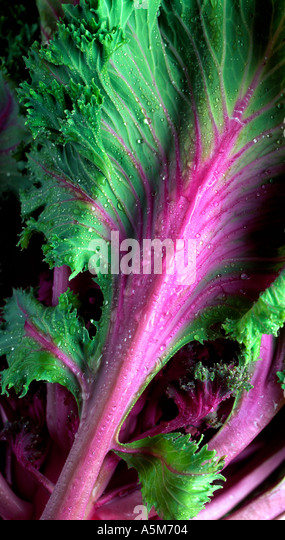 Close up strips of kohlrabi lettuce - Stock Image