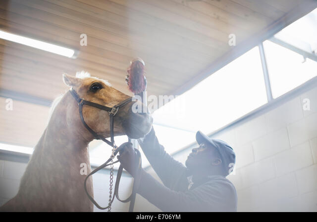 Low angle view of male stablehand grooming nervous horse - Stock-Bilder