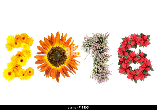 2016 New Year date formed from marigold flowers, sunflower, heather and poinsettia representing four season of the - Stock-Bilder