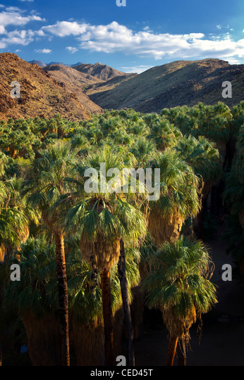 Overview of Palm Canyon. Indian Canyons. Palm Springs, California. - Stock Image