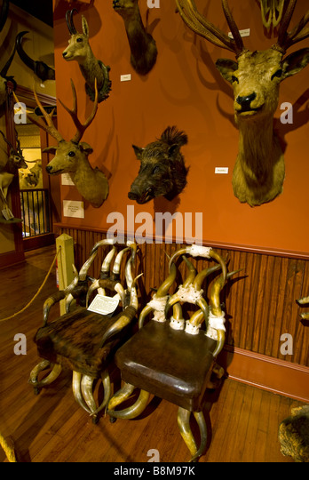 Buckhorn Saloon and Museum San Antonio Texas tx landmark above over chairs handmade from animal horns stuffed animal - Stock Image