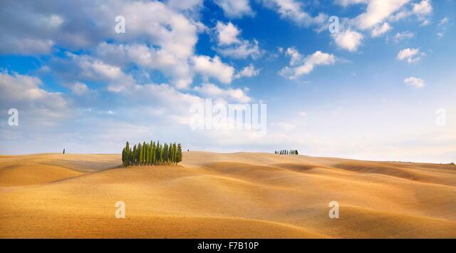 Cypress trees landscape, Val d'Orcia, Tuscany, Italy - Stock-Bilder