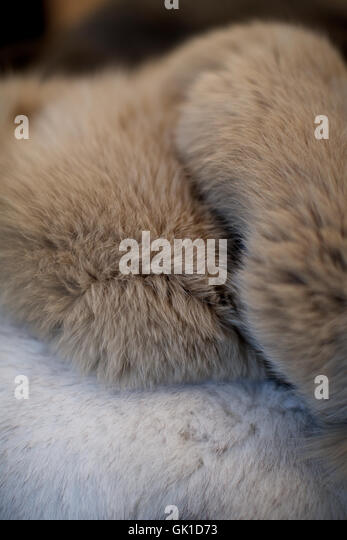 close up of fur jacket. texture, coat, animal hair, soft. - Stock Image