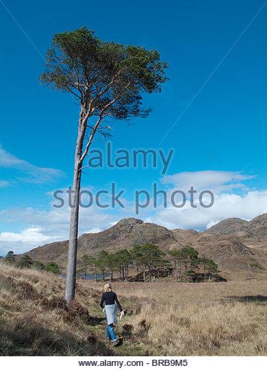 Hiker hiking past tree in remote field under blue sky - Stock-Bilder