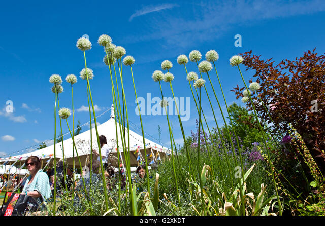 The flower border on the lawn at Hay Festival 2016 - Stock Image