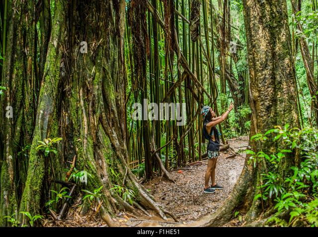 Young female tourist photographing on smartphone in jungle,  Manoa Falls, Oahu, Hawaii, USA - Stock-Bilder