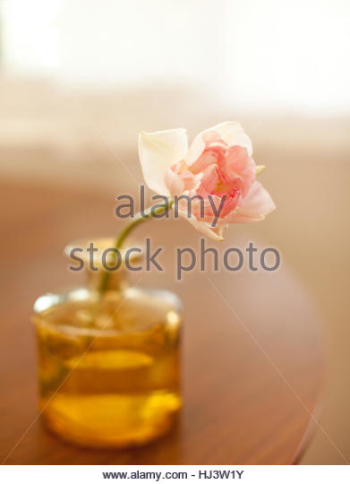 Arranged Fresh Cut Flowers - Stock-Bilder