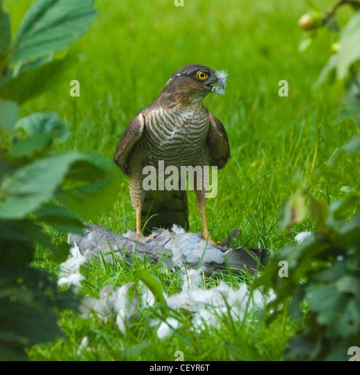 how to stop pigeons in garden