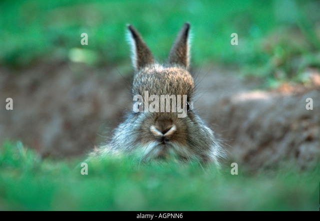 Rabbit - Stock Image