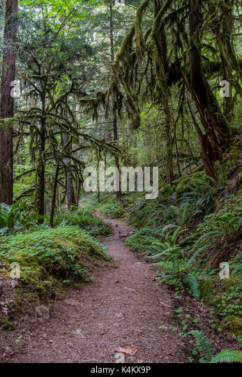 Mossy Trees Loom Over Trail - Stock Image