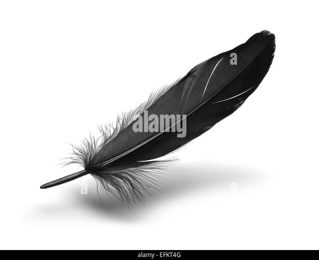 Single Black Floating Feather Isolated on White Background. - Stock Image