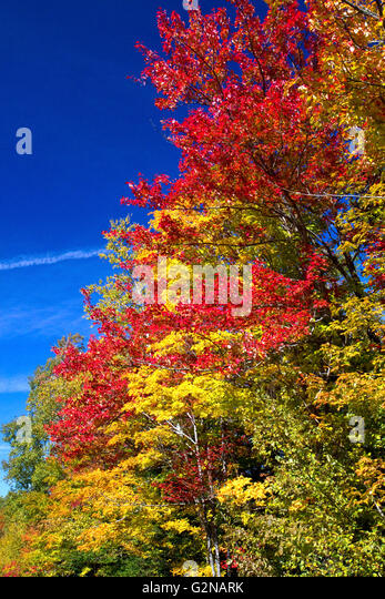 Fall foliage on a rural backroad north of Stowe, Vermont, USA. - Stock Image