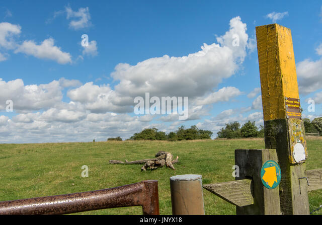 Burton Lazars, Leicestershire, UK. 31th July 2017. UK Weather. Golden fields of corn, blue sky white clouds, wild - Stock Image