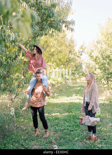 Orchard. Three people picking apples from a tree. - Stock Image