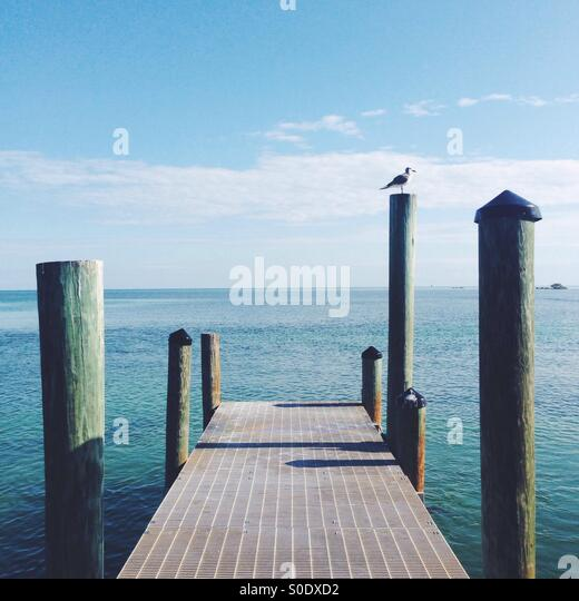 Dock and Seagull - Stock Image